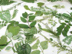 Pressed Leaves by Leaf Decor