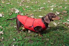 Dachshund Winter dog coat with underbelly protection - Dog Jacket - Custom made Dog Raincoat, Waterproof / Fleece - MADE TO ORDER Dog Jumpers, Dog Winter Coat, Dog Raincoat, Waterproof Coat, Mini Dachshund, Dog Jacket, Dog Wear, Dog Sweaters, Dog Coats