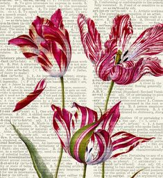 Tulips17th century Tulip painting