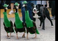 Je leur bouferais bien leurs chapeaux. ?..