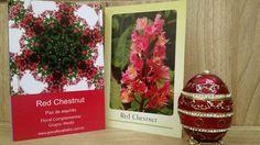 Cards Florais de Bach de Graça Fialho Boaventura www.gracafloralfialho.com.br