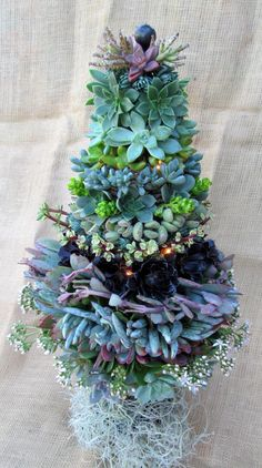 25 Modern Ideas to Design Live Christmas Trees with Succulents Succulent Arrangements, Cacti And Succulents, Planting Succulents, Planting Flowers, Floral Arrangements, Succulent Tree, Garden Art, Garden Plants, House Plants