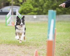 What is Rally Obedience?