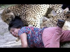 Awesome Videos: Most Amazing Wild Animals Attacks - Must Watch!!!