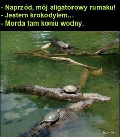 "The Turtle Calvary: Onward alligator steed! ""I'm a crocodile"" Silence, water horse! Very Funny Memes, Wtf Funny, Funny Quotes, Monday Humor Quotes, Friday Humor, Friend Zone, Memes Humor, Jokes, Funny Images"