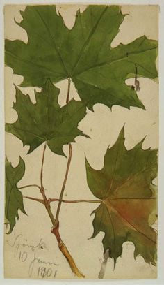 John Bauer Dandelion Drawing, Art Nouveau, John Bauer, Victorian Life, Edmund Dulac, Dear John, Ap Art, Indian Summer, Fantasy Creatures