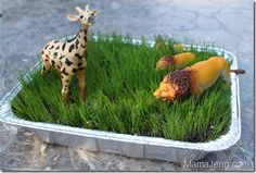 Growing grass for kids to play with. This is a good idea especially for my kids since we are all desert landscaped and have no grass. Good summer activity.