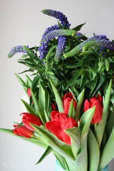 tulipanes rojos y flores moradas