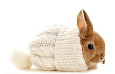 Holy crap - it's a bunny cozy-- MaryJane would hate this <3