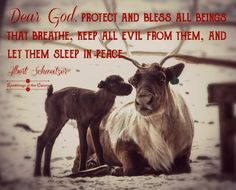 Dear God, protect and bless all beings that breathe, keep all evil from them, and let them sleep in peace #animals #Christmas #compassion