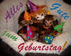 Edel Kätzchen: Alles Gute zum Geburtstag!