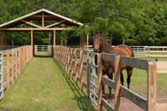 What a smart idea- covered shelter that gives cover to multiple pastures