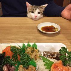 """""""《猫あるある》 人間の食べ物に執着する。"""
