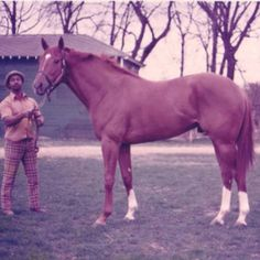 Big Red, I'd have loved to ride him what a horse.