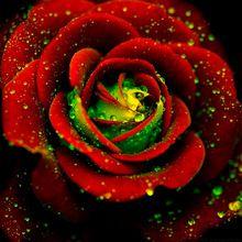 100 PCS Floração Vermelho Rosa Bush Flor Verde Sementes Da Herança Forte Perfumado Flores Escalada(China (Mainland))