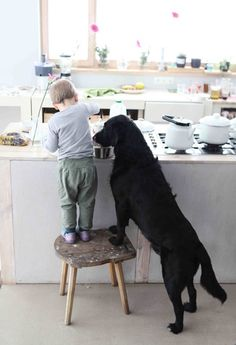A dog makes the perfect sous chef for a little boy. Adorable.