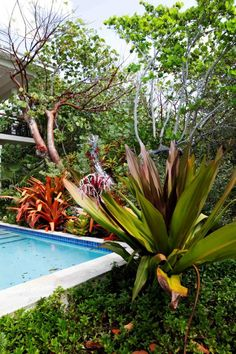 Grand Cayman, Cayman Islands, Where The Heart Is, Nursery, Nature, Plants, Projects, Log Projects, Day Care