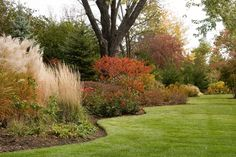 Include perennial grasses and shrubs will amazing fall color for year round landscape interest Perennial Grasses, Planting Shrubs, Ornamental Grasses, Perennials, Landscape Plans, Landscape Design, Small Gardens, Outdoor Gardens, Beautiful Landscapes