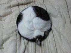 Кругло-кот  Circled cat