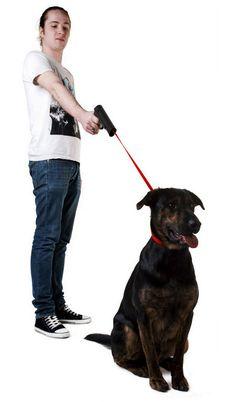 dog-walking-gun