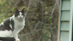 Animal Update: Matilda the Cat | The Incredible Dr. Pol