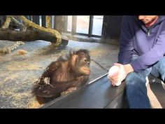 Monkey Sees A Magic Trick - YouTube