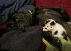 Puppy Found Orphaned Kitten and Refused to Leave Him, Now 3 Years Later...