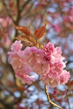 新緑の奈良公園 - 気まぐれ 花★旅日記
