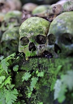 The small village of Trunyan sits on the eastern shore of Bali's Lake Batur and in the shadow of the island's most famous volcano, Mt. This area is less than two… Mundo Design, Skull Reference, Yennefer Of Vengerberg, Gothic Garden, Slytherin Aesthetic, Skull And Bones, Diy Halloween Decorations, Memento Mori, Skull Art