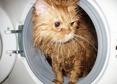 Cat's positive – 26 pics | Picturescrafts.com