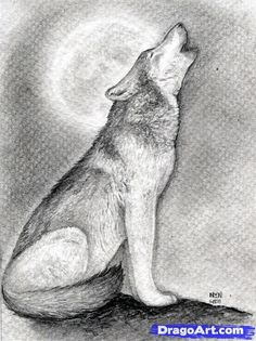 how to draw a howling wolf step 15