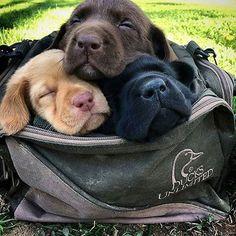 cute unique dog