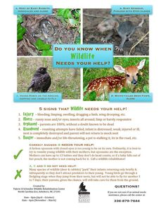When does wildlife need your help? ...from the North Carolina Zoo VHS Wildlife Rehab Center