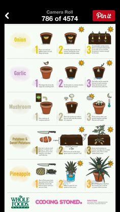 gardening Eco Garden, Indoor Garden, Garden Ideas, Raised Planter, Planter Pots, Potager Palettes, Plants Sunny, Planting Onions, How To Store Potatoes