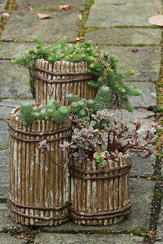A Sedum pot. | Flickr - Photo Sharing!