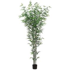 7' Bamboo Silk Tree w/Pot -Green (pack of 2) ** You can get more details by clicking on the image.