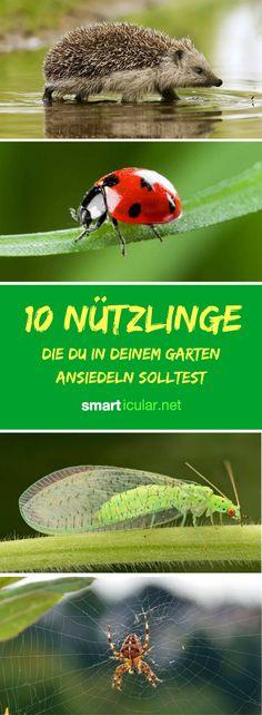 Gärtnern im Einklang mit der Natur: Wenn du für diese Nützlinge gute Bedingungen schaffst, helfen sie zum Dank bei der Gartenarbeit.