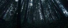 "The Cinematography of ""The Revenant"" Cinematographer: Emmanuel Lubezki Won the 2015 Academy Award for Best Cinematography The Revenant, Futuristic Makeup, Hunter Valley Wedding, Movie Screenshots, Best Cinematography, Film Grab, Dark Makeup, Character Costumes, Film Stills"