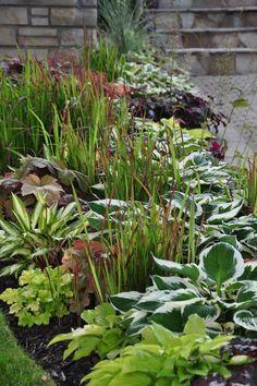 A Garden in the Shade