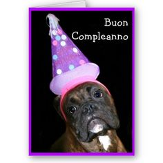 $3.45 Italian birthday card.   Cute Boxer dog wearing a party hat.