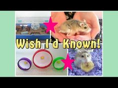 5 THINGS I WISH I'D KNOWN ABOUT HAMSTER CARE!! - YouTube