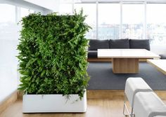 Indoor 12 Pocket Vertical Living Wall Planter – www.delectablegardenshop.com