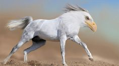 The Eagallop (Horse/Eagle Hybrid) | The 7 Creepiest Horse-Animal Hybrids