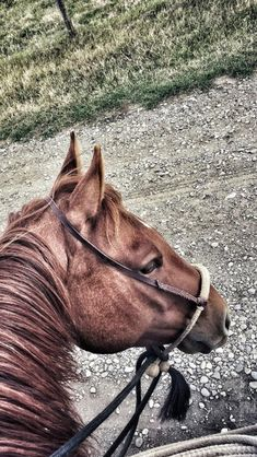 Barrel Racing Horses, Rodeo Life, Horse Gear, Horse World, Cowboy And Cowgirl, Horse Farms, Cowgirls, Horse Riding, Beautiful Horses