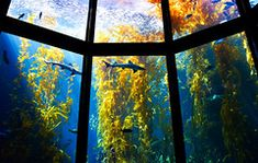 Under the Sea Sea Aquarium, Monterey Bay Aquarium, Fish Tank, Under The Sea, Artwork, Beautiful, Work Of Art, Aquarium, Auguste Rodin Artwork