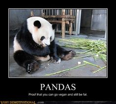 PANDAS  proof that you can go vegan and still be fat.