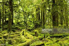 Stock Photo : lush green rain forest.
