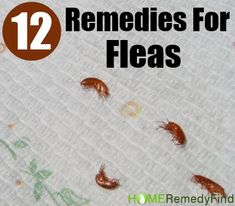 Home Remedies Fleas are a common health disease which is mostly found in pet animals especially among cats and dogs. It is believed that fleas are difficult… Dog Training Methods, Basic Dog Training, Dog Training Techniques, Training Your Puppy, Training Dogs, Home Remedies For Fleas, Flea Remedies, Natural Remedies, Essential Oils For Fleas