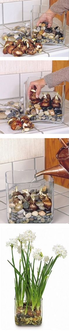 How to make bulbs grow in a rock jar.