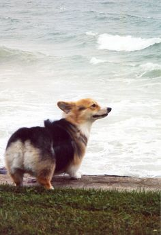"""My life is like a stroll on the beach...as near to the edge as I can go."" - Thoreau 